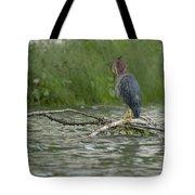 Green Heron In Water Tote Bag
