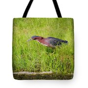 Green Heron On The Hunt Tote Bag