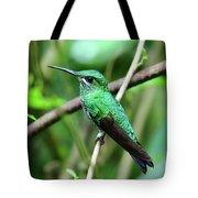 Green Crowned Brilliant Hummingbird Tote Bag