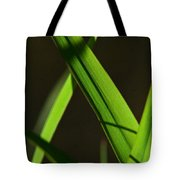 Green Leaves In Sunlight Tote Bag
