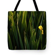 Green Marsh Grass At Sunrise On Lake Cassidy  Tote Bag