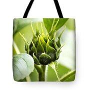 Green Sunflower Bud Tote Bag