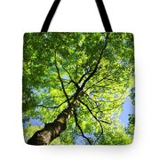 Summer Tree Canopy Tote Bag