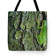 Green Tree Frog On Lichen Covered Bark Tote Bag