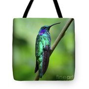 Green Violet Ear Hummingbird Tote Bag