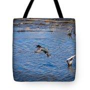 Green-winged Teal 4 Tote Bag
