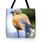 Green Winged Wood Duck 1 Tote Bag