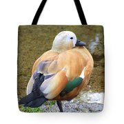 Green Winged Wood Duck 2 Tote Bag