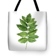 Gren Fern, Forest Plant Home Garden, Minimalist Abstract Poster Tote Bag