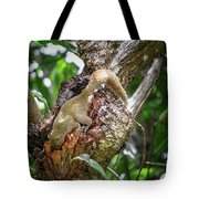 Grey Bellied Squirrel Tote Bag