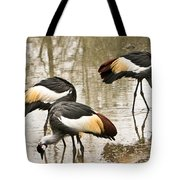 Grey Crowned Crain Of Africa 5 Tote Bag