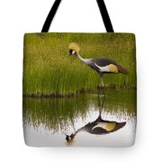 Grey Crowned Crane - Signed Tote Bag