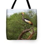 Grey Crowned Crane Tote Bag by Yair Karelic