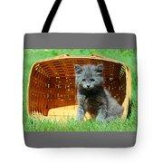 Grey Fluffy Kitten In Market Basket Tote Bag