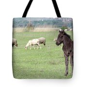 Grey Foal On Pasture Farm Scene Tote Bag