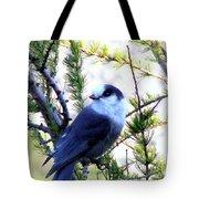 Grey Jay In A Juniper Tree Tote Bag