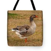 Greylag Goose 1 Tote Bag