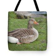 Greylag Goose Resting Tote Bag