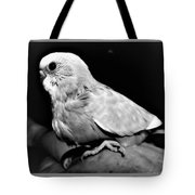 Greyscale Parraket Baby Sitting On Hand Tote Bag