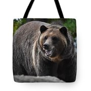 Grizzly Bear 3 Tote Bag