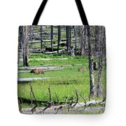 Grizzly Bear And Cub Cross An Area Of Regenerating Forest Fire Tote Bag