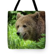 Grizzly Bear Tote Bag
