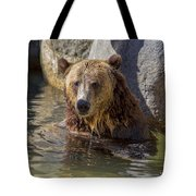 Grizzly Bear - San Diego Zoo Tote Bag