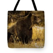 Grizzly Bear-signed-#6672 Tote Bag