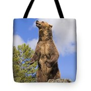 Grizzly Bear Standing On A Ridge Tote Bag