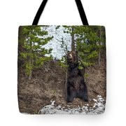 Grizzly Shaking A Tree Tote Bag