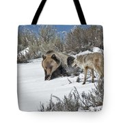 Grizzly With Coyote Tote Bag