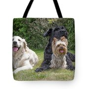 Group Of Three Dogs Tote Bag