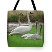 Group Of Young Swans Tote Bag