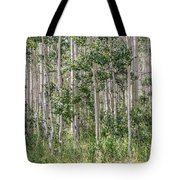 Grove Of Quaking Aspen Aka Quakies Tote Bag