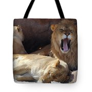 Growling Male Lion In Den With Two Females Tote Bag