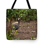 Guineahen Looking For Food Tote Bag