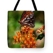 Gulf Fritillary On Butterflyweed Tote Bag