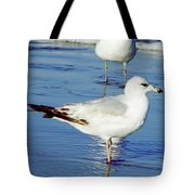 Gull - Beach -reflection Tote Bag