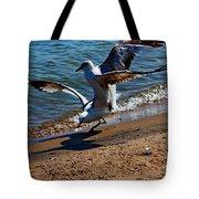 Gull Fight Tote Bag by Amanda Struz