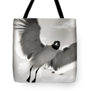 Gull In Flight 2 Tote Bag