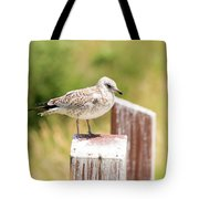 Gull On A Post Tote Bag