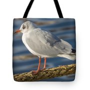Gull On A Rope Tote Bag