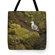 Gull On Cliff Edge Tote Bag