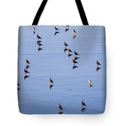 Gulls And Reflections Dot The Water Tote Bag