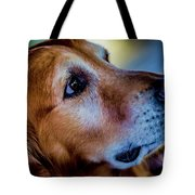 Gus As Photo Assistant 3504 Tote Bag