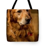 Gus Hoping To Share Some Bacon 3547v Tote Bag