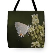Hairstreak Butterfly Tote Bag