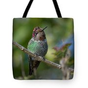 Curly Top Hummer Do Tote Bag