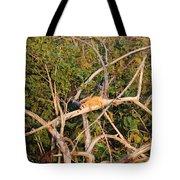 Hanging Iguana Tote Bag