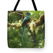 Hanging With The Moss Tote Bag